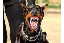 Guard dog extreme
