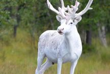 Ritka állatok / Albinó