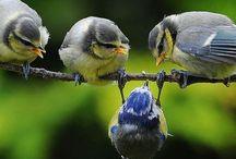 Pájaros! ♡