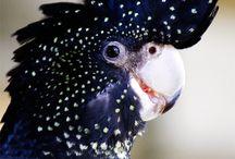 Vögel's Muster