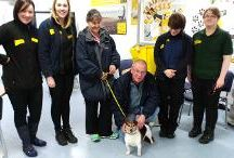 Ballymena | Northern Ireland  / Dogs Trust Ballymena is the only rehoming centre in Northern Ireland and is the smallest centre with 23 kennels which can house between 40-50 dogs and puppies. We have a variety of gorgeous dogs so it is always worth a visit to the centre. Everyone who visits the centre and is looking for a dog is required to fill in a home finding questionnaire  to help us match the correct dog to the home.