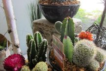 Fun Plants / Interesting plants and fun ideas for displaying them