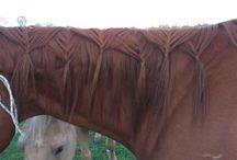 Idee per criniere cavallo