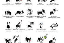 dicas para cachorros