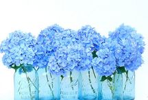FLOWERS.HYDRANGEA / by fred c