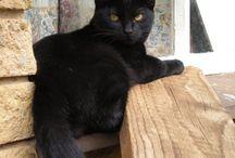 Gatti Neri / Non è vero che i gatti neri portano sfortuna!!!