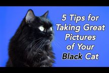 Photography / Taking pictures of your cat