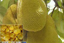 Fruit / All edible growing..........um...fruit