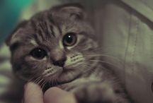 Kahve Kitap Kedi - Coffee Book Cat