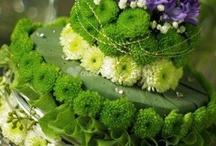 Çiçekler kaktüs