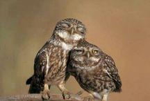 Owlme