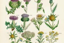 Ботанические открытки