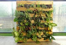 Gartenideen / Deko Pflanzen