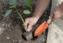 Садоводство / Идеи для сада, посадка и уход за растениями,