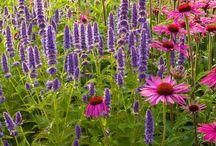 massifs fleuris / mes inspirations pour les massifs fleuris au jardin d'ornement.