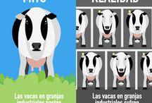 Industria de la leche