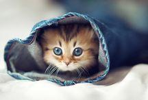 CATS !! <3