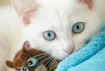 Amor por los gatos