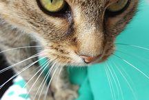 cat in da house / Meine Mieze