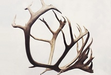Antlers/ things made of them! / by sheryl stow