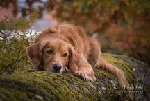 Hunde Nicole Kohl Fotografie