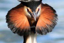 Birds-Kuşlar