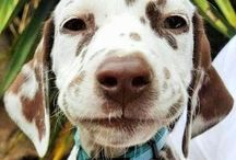 Puppy Dogggggg!