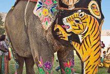 Culorile Indiei, culorile Africii!