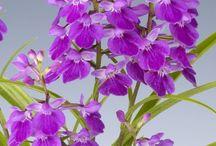 Flores / Arreglos florales!! Floreros.. Flores...