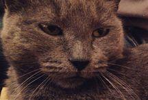 The most beautiful cat / Η μικρή μου Τεκίλα. Ένα πανέμορφο γατάκι, χαδιάρικο και πανέξυπνο μόλις 9 μηνων.!!!!!!!!