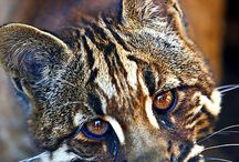 animals / by Joanne Anderson-Beaty