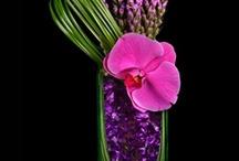 Kompozycje z kwiatów ciętych / Nasza profesjonalna opieka obejmuje pielęgnację, nawożenie płynnymi eco odżywkami, czyszczenie z kurzu itp., spryskiwanie liści odżywkami, usunięcie uschniętych kwiatostanów lub starych liści, przywiązanie do nowych podpór lub tyczek.  Świadczymy także usługi przesadzania roślin do nowych donic za dodatkową opłatą oraz sprzedaż donic, ziemi, preparatów i odżywek.Wykonujemy projekty i aranżacje wnętrz roślinami doniczkowymi w biurach, firmach i u osób prywatnych.
