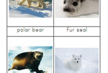 Antartica - Polar animals