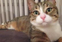 Mango cat