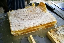 Honeybees and Combs