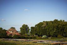 Iris / Les Jardins du Château de Vullierens sont réputés pour leurs iris. Avec plus de 400 variétés, les Jardins ont la plus grande et la plus moderne collection d'iris d'Europe.