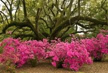 Kvety vprírode