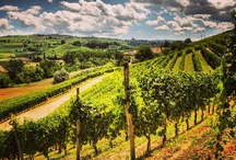 Italian vineyard landscapes / Admiring the historical landscapes where our prestigious wine is born.