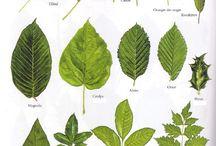 planches botanique