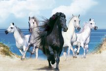 ➤ HORSE