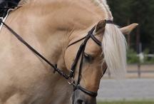 Verdens vakreste hesterase ♥️