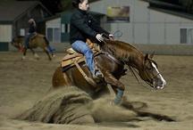 Reining horses  / by Jessica Jones