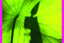 picta day 2015 / Die Bildagentur www.flora-print.de wird auf der Bildagenturmesse Picta Day mit der Tischnummer 17 vertreten sein.