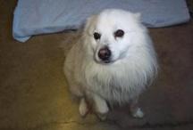 pets that need adopting...from jackson michigan