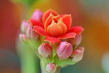 Цветы Гуишника