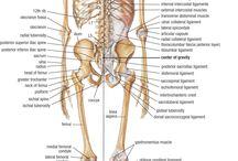Biologie anatomie