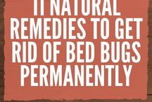 natural remedy against bed bugs