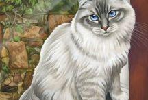 Kissat valkoiset