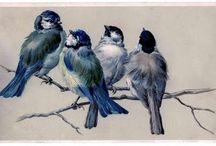 Grafika. Ptaki