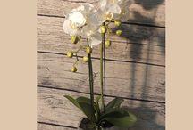 Beültethető szálas selyemvirágok